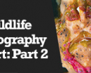 Wetpixel Live: Part Two of How Wildlife Photography Became Art Photo