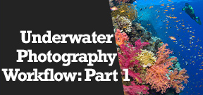 Wetpixel Live: Workflow for Underwater Photographers Photo