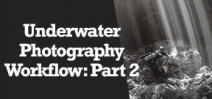 Wetpixel Live: Workflow for Underwater Photographers-Part 2 Photo