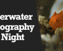 Wetpixel Live: Underwater Photography at Night Photo