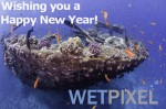 Happy New Year from Wetpixel Photo