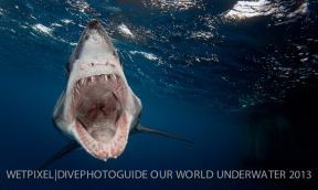 Results announced: Our World Underwater 2013 Photo