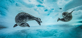 Underwater imagery from the finalists of WPOTY 2017 Photo