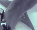 Video: Hammerhead fin cam by Andy Casagrande Photo