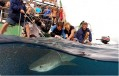 Undersea Explorer tags tiger shark Photo