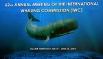 IWC Agadir meeting fails to reach agreement Photo