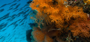 U.S.A. announces expanded marine sanctuary Photo