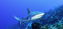 Study into shark social behaviour Photo