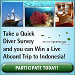 Take a diver survey and win a trip to Indonesia Photo