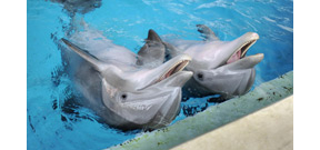 The National Aquarium in Baltimore to move dolphins to a sanctuary Photo