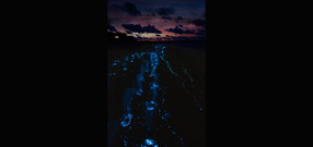 Filmmaker Martin Dohrn creates special camera to film bioluminescence Photo