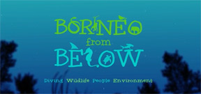 Borneo from Below: Parrotfish Photo