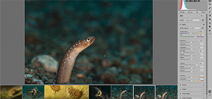 Adobe Adds Super Resolution Option to Camera Raw Photo