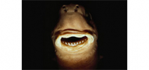 Article published on cookie cutter shark bites of whales Photo