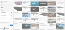 Online tool for shark identification Photo