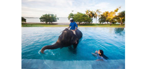 Underwater photo shoot in a pool with an elephant Photo