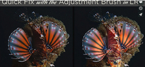 Tutorial: Erin Quigley on the Adjustment brush in LR4 Photo
