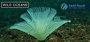 Video: Feather Duster Worms Emerge Photo