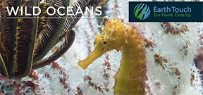 Video: Wild Oceans from the Phi Phi Islands Photo