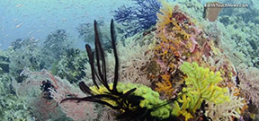 Video: Corals, clear waters and cruising fish Photo
