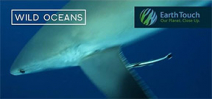 Silvertip shark camera bump on Wild Oceans Photo