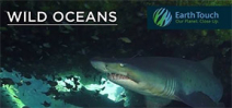 Video: Ragged tooth sharks of Aliwal Shoal Photo