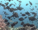 Video: Wakatobi Part 2 by Earth Touch Photo