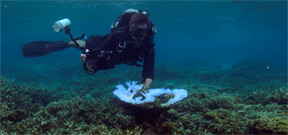 Exposure labs is still seeking UW photographers to help with coral bleaching video Photo