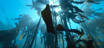 Video: Sony F55 underwater by Dan Beecham Photo