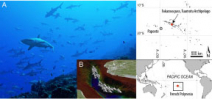 Paper describes shark concentration at Fakarava Photo