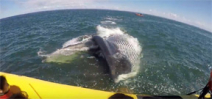 Quebec tourists are treated to an up close and personal fin whale encounter Photo