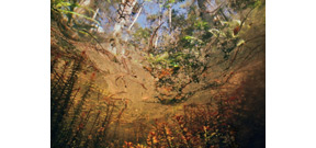 Karen Glaser's Springs and Swamps Series Photo