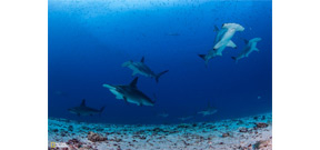 New marine sanctuary established in Galapagos Islands Photo