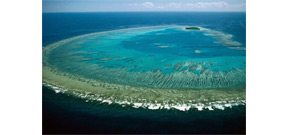 Environmental photographer dies while snorkeling Great Barrier Reef Photo