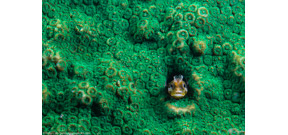Voting for Por el Planeta people's choice award now open Photo