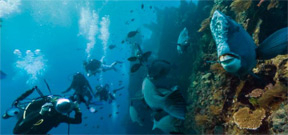 Google expands street view to include 40 more underwater locations Photo