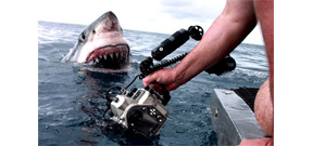 Story behind a viral great white shark shot Photo