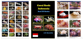 Indonesia Coral Reef guide released Photo