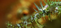 Video: Lembeh Straits - a macro symphony by Kay Burn Lim Photo