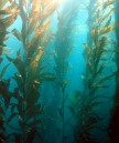 California establishes Marine Preserves Photo