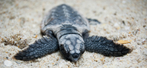 Turtle conservationist murdered in Costa Rica Photo