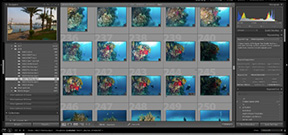 Lightroom Coffee Break: Using the metadata painter Photo