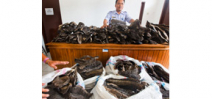 Indonesia punishes illegal manta ray trader Photo