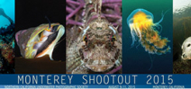 Call for entries: Monterey Shootout 2015 Photo