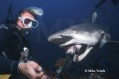 Mike Veitch on Shark Photography Photo