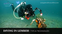 Video: Lembeh Tips and Techniques Photo