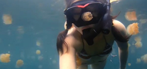 Video: Lost in Jellyfish Lake Photo