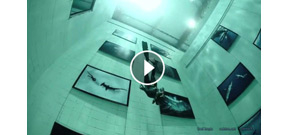 Launch of underwater photo exhibit at Nemo 33 Photo