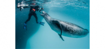 Interview with underwater photographer Paul Nicklen on NPR's Fresh Air Photo