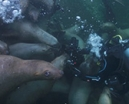 Video: Paul Nicklen by the RED Collective Photo